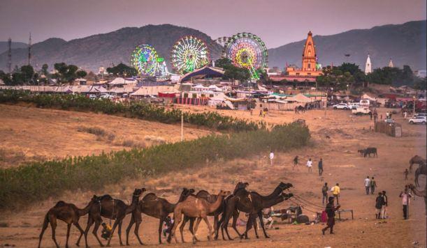 Pushkar camel fair2