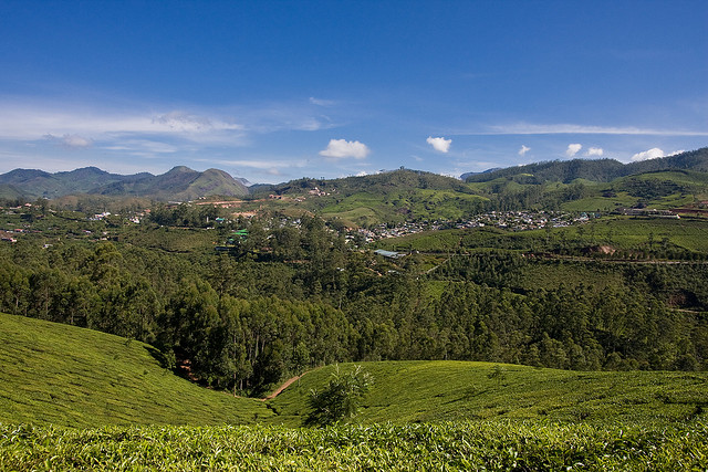 A View of Munnar