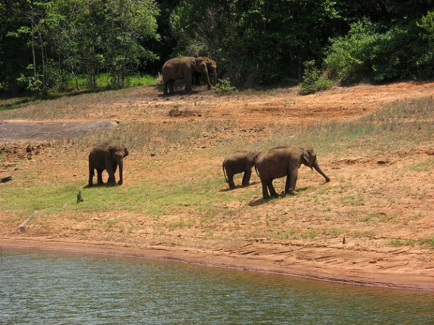 Periyar Widlife Sanctuary