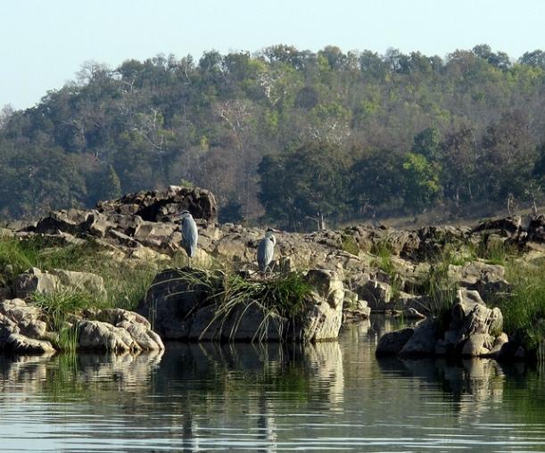 Birds Species, Panna National Park
