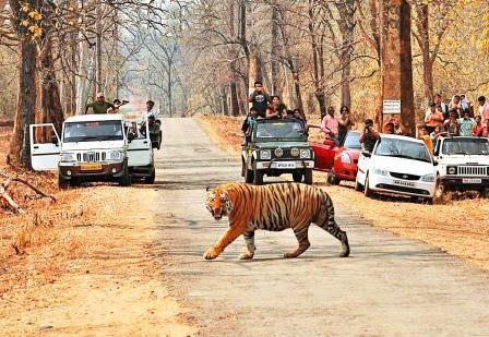 Melghat Tiger Reserve amravati maharashtra
