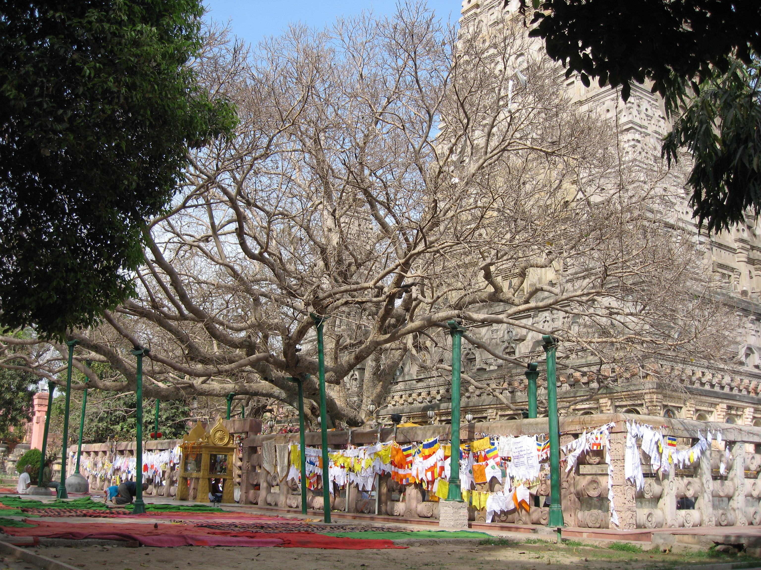 Bodh Gaya India  city images : Mahabodhi Tree, Bodhgaya
