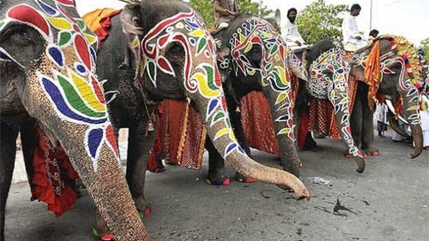 Painted Elephants Ready To Welcome Of Chariots