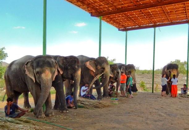Elefantastic Farm, Jaipur
