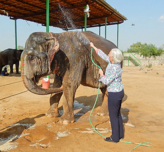 Washing the Elephants in Elefantastic, Jaipur