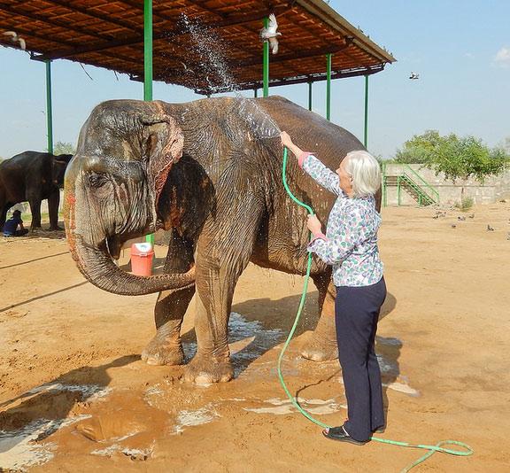 Washing the Elephants in Elefantastic, Jaipur