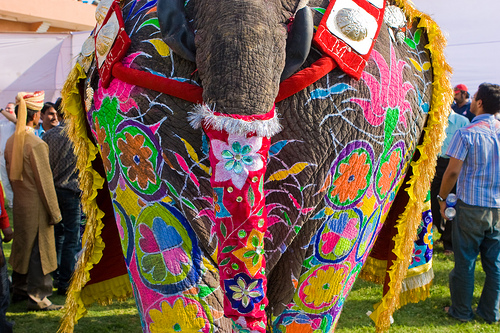 elephantfestival1-jaipur