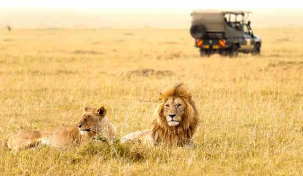 Gir National Park , Gujarat
