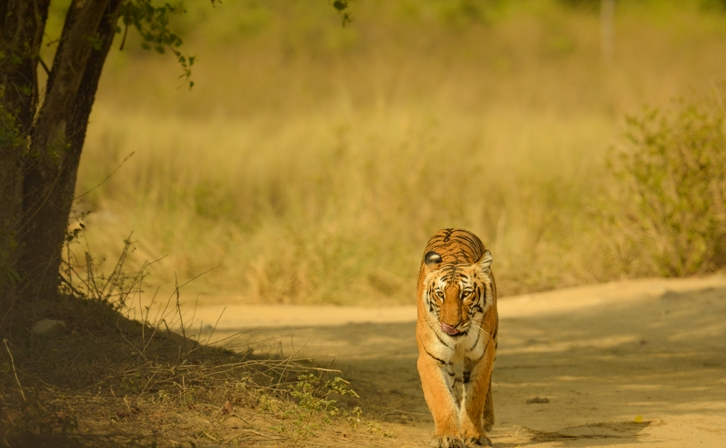 tiger-corbett-park